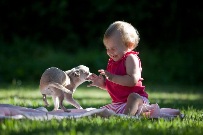 Cachorros e bebês - A importância da interatividade